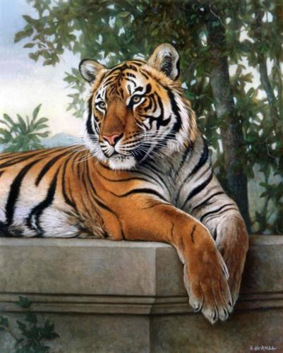 tigre-bengala